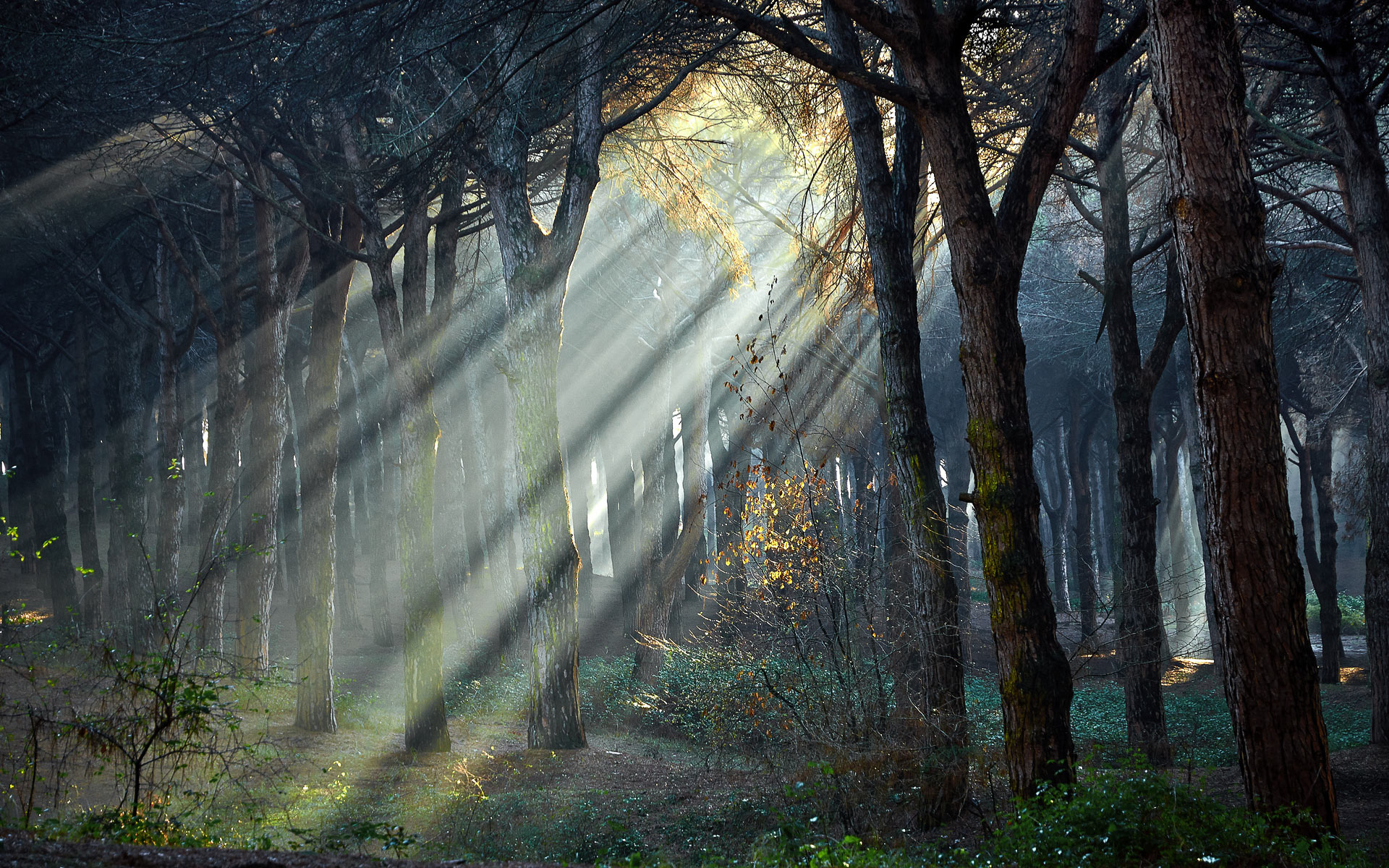 home_story_gallery_forest_1.jpg